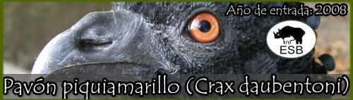 Pavón piquiamarillo (Crax daubentoni)