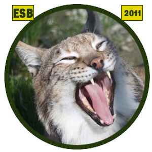 Lince europeo (Lynx lynx)