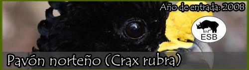 Pavón Norteño (Crax rubra)