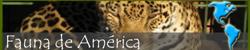 Fauna americana