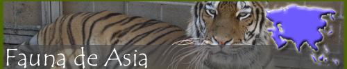 Fauna asiática