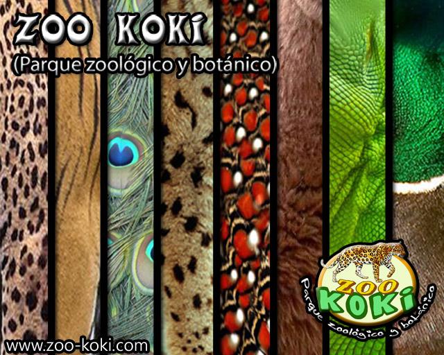Imagen principal zoo koki