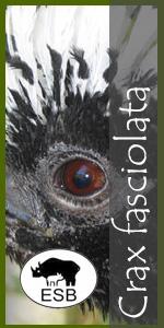 Crax fasciolata