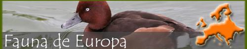 Fauna europea
