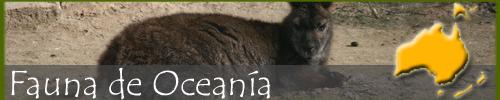 Fauna oceania