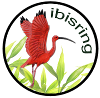 ibisringnew