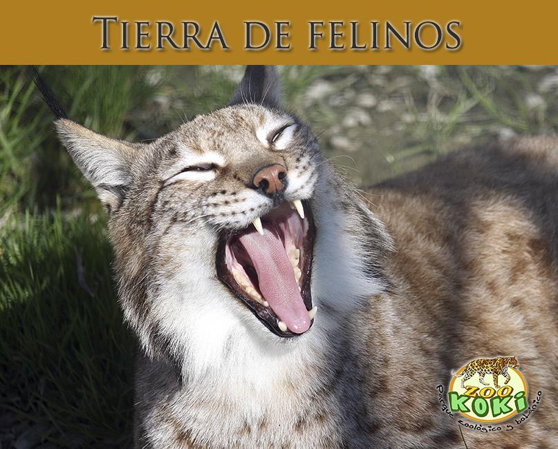 Tierra de felinos